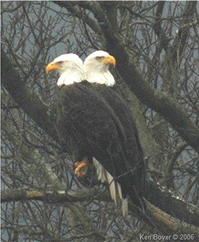 Pair of Eagles 2006